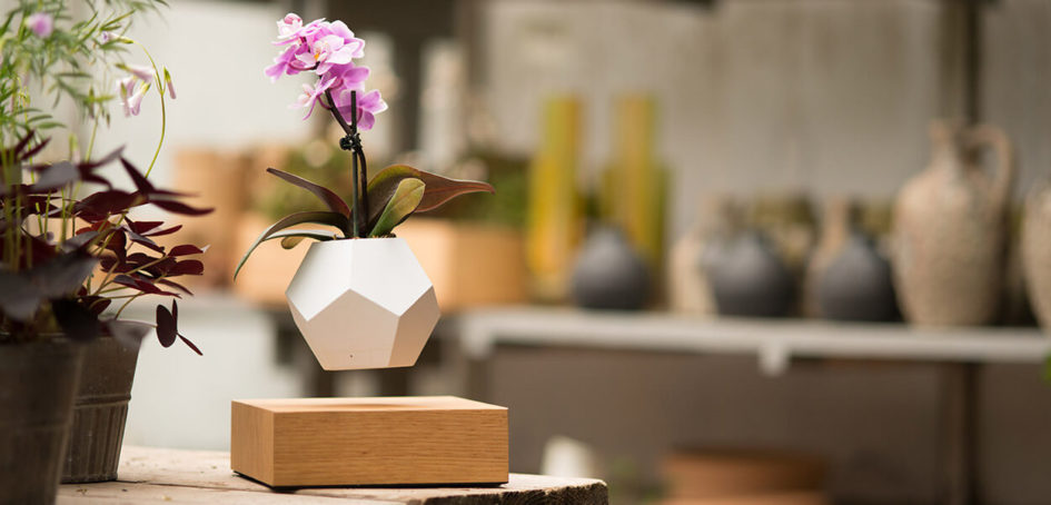 lyfe levitating planter floating plants by flyte 1