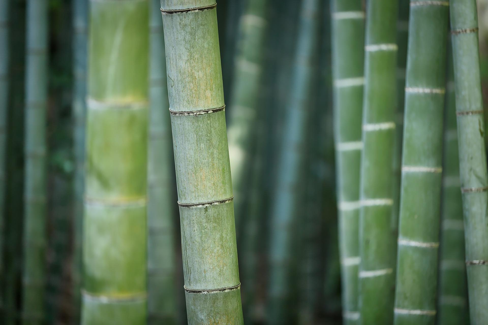 bamboo 3028709 1920