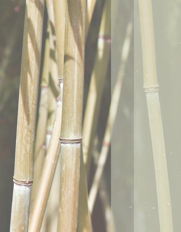 9 Бамбук