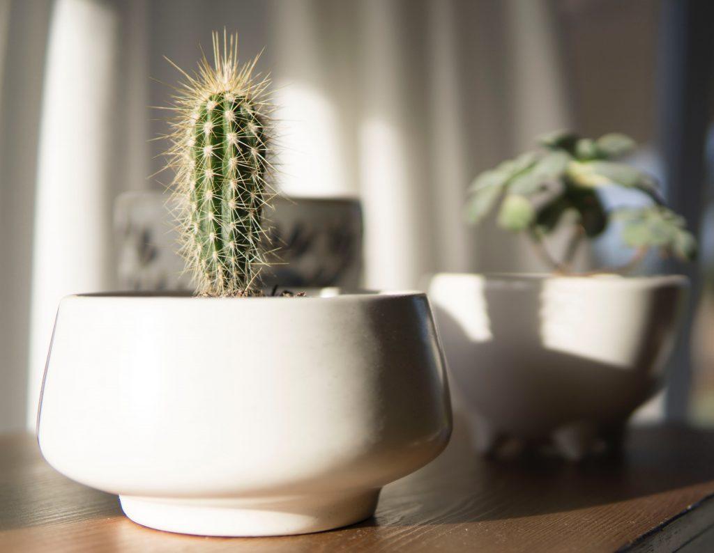 blur bonsai cactus 1058963