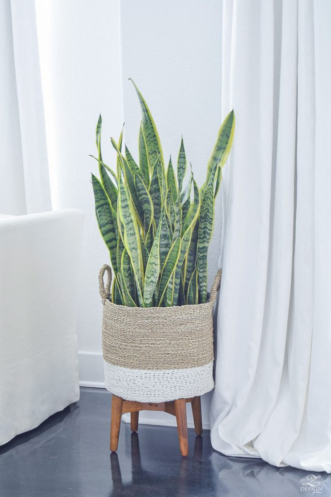 snake plant mother in laws tounge in basket modern design mid centry modern plant stand 1
