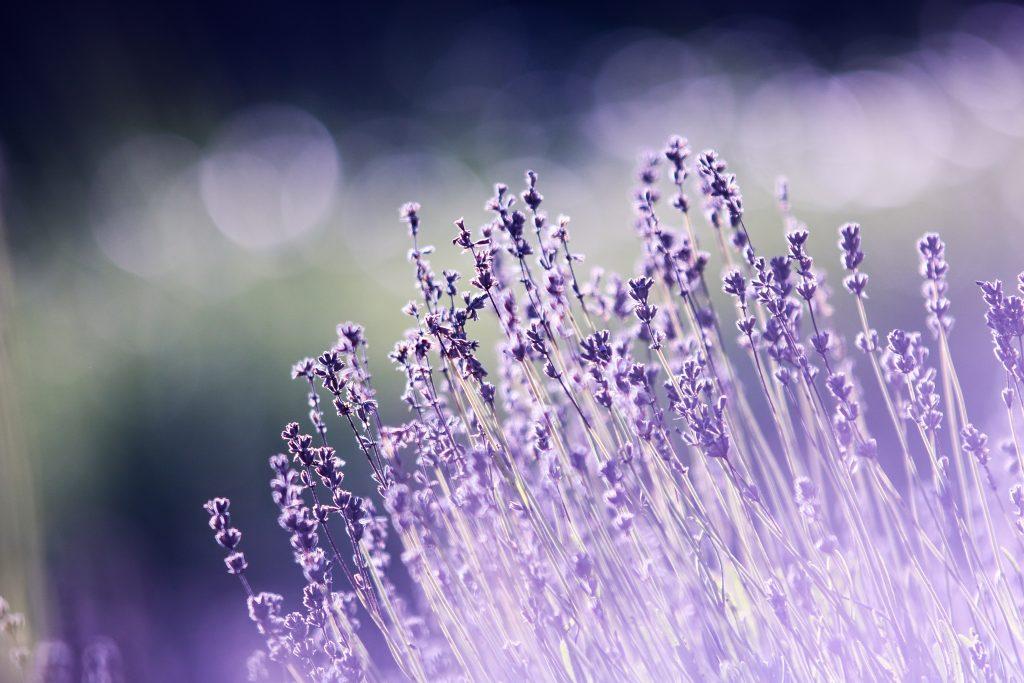 aromatherapy beautiful blooming blur 286763