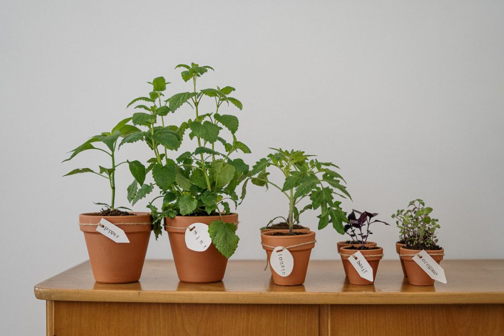 photo of potted plants on wooden table 4503273