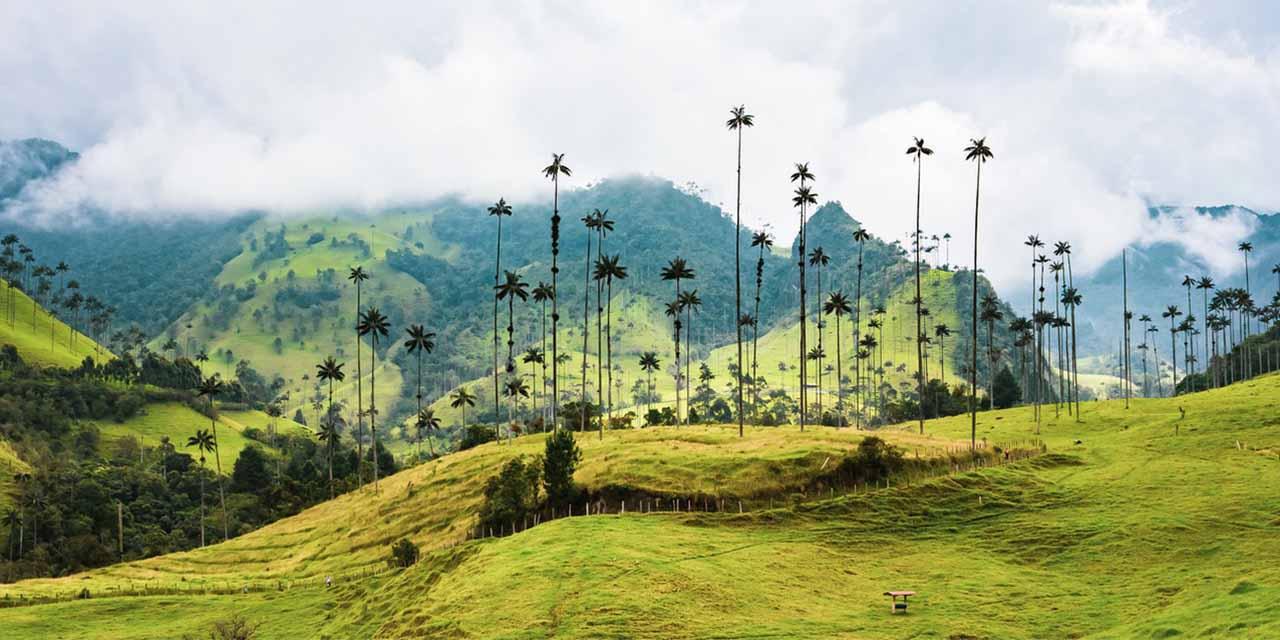 Salento Colombia2 coffee region palms