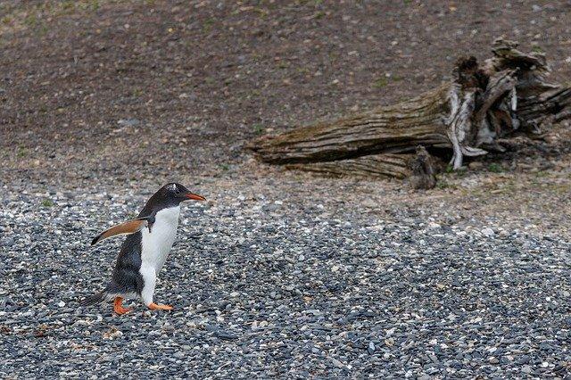 donkey penguin island magdalena